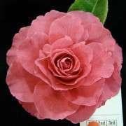 R Valentine Day