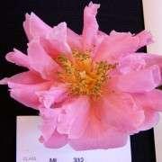 J Pink Granth